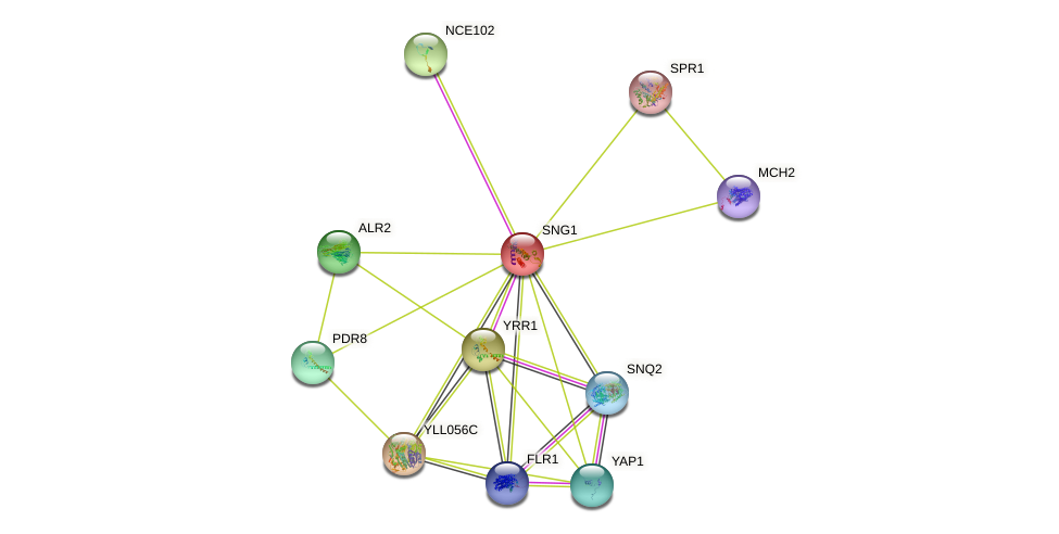 SNG1 protein (Saccharomyces cerevisiae) - STRING interaction network