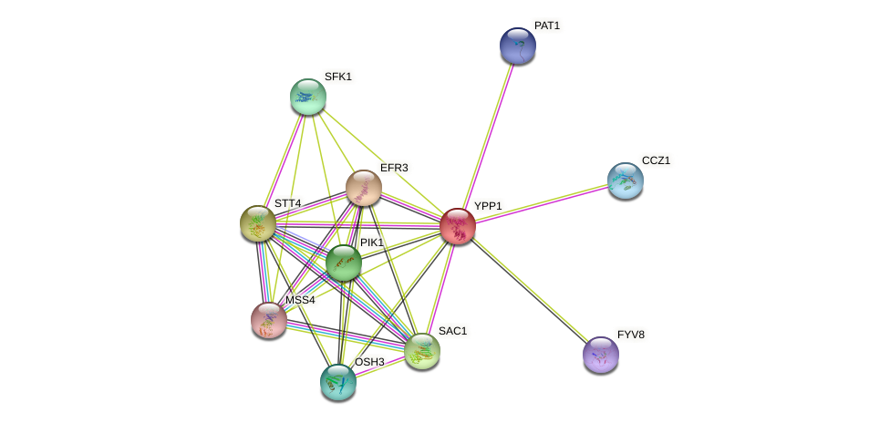 YPP1 protein (Saccharomyces cerevisiae) - STRING interaction network
