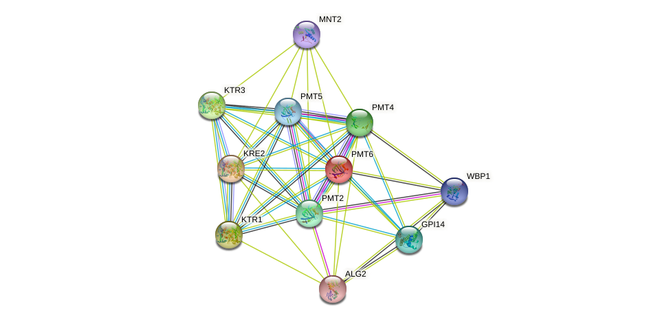PMT6 protein (Saccharomyces cerevisiae) - STRING interaction network