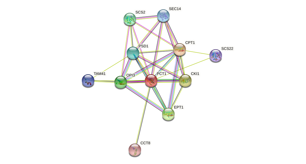 PCT1 protein (Saccharomyces cerevisiae) - STRING interaction network