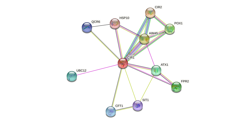CIR1 protein (Saccharomyces cerevisiae) - STRING interaction network