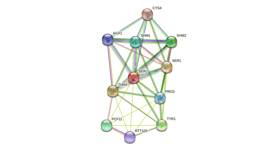 SER2 protein (Saccharomyces cerevisiae) - STRING interaction network