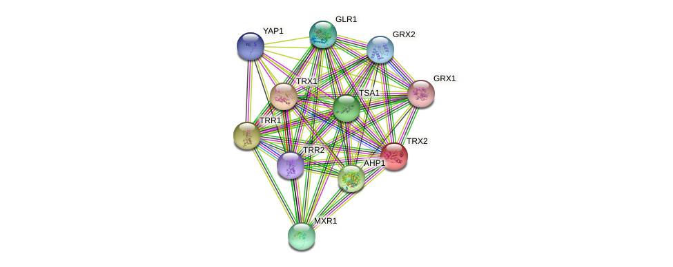 TRX2 protein (Saccharomyces cerevisiae) - STRING interaction network
