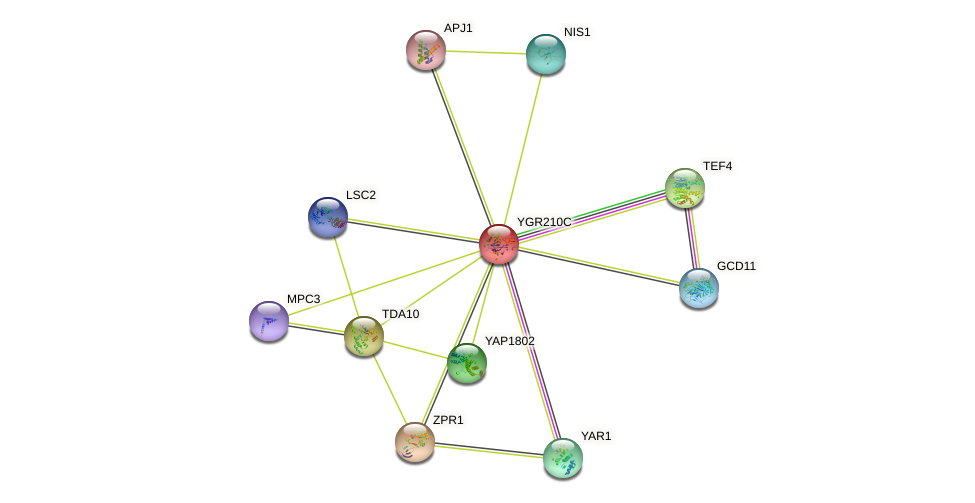 YGR210C protein (Saccharomyces cerevisiae) - STRING interaction network