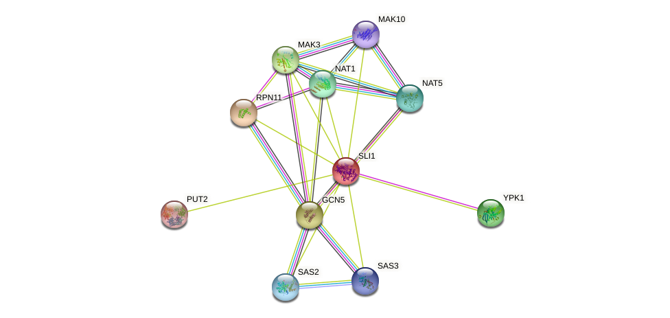 SLI1 protein (Saccharomyces cerevisiae) - STRING interaction network