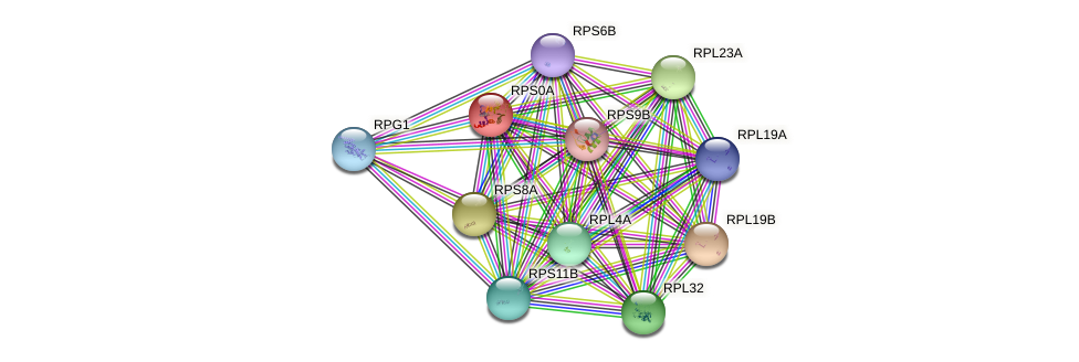 RPS0A protein (Saccharomyces cerevisiae) - STRING interaction network