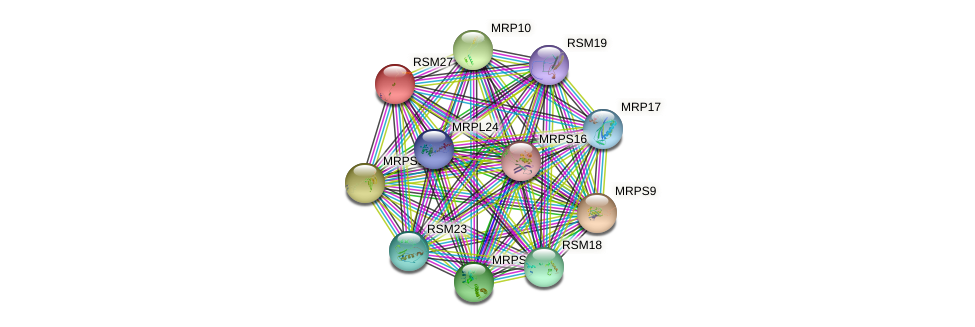 RSM27 protein (Saccharomyces cerevisiae) - STRING interaction network