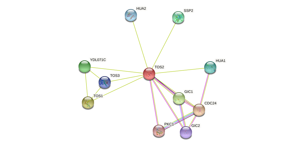 TOS2 protein (Saccharomyces cerevisiae) - STRING interaction network