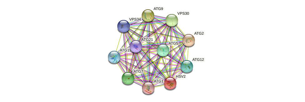 HSV2 protein (Saccharomyces cerevisiae) - STRING interaction network