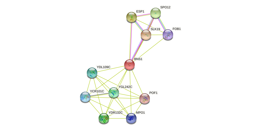 BNS1 protein (Saccharomyces cerevisiae) - STRING interaction network
