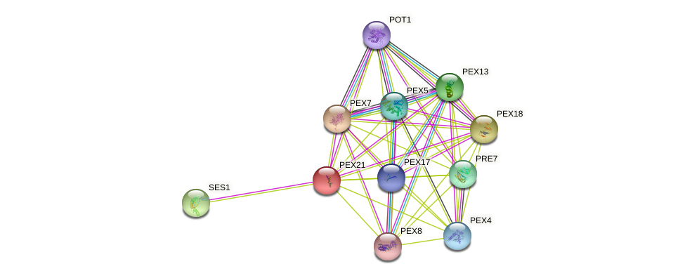 PEX21 protein (Saccharomyces cerevisiae) - STRING interaction network