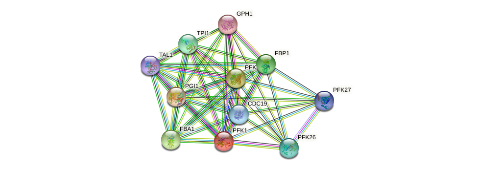 PFK1 protein (Saccharomyces cerevisiae) - STRING interaction network
