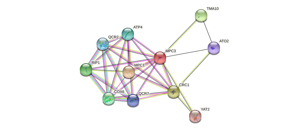 MPC3 protein (Saccharomyces cerevisiae) - STRING interaction network