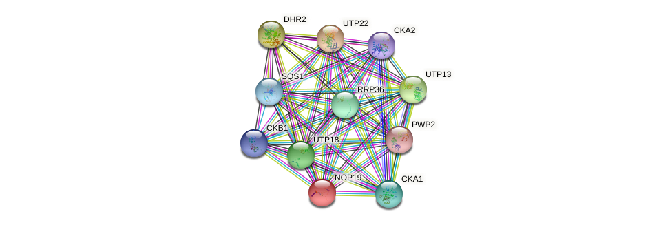 NOP19 protein (Saccharomyces cerevisiae) - STRING interaction network
