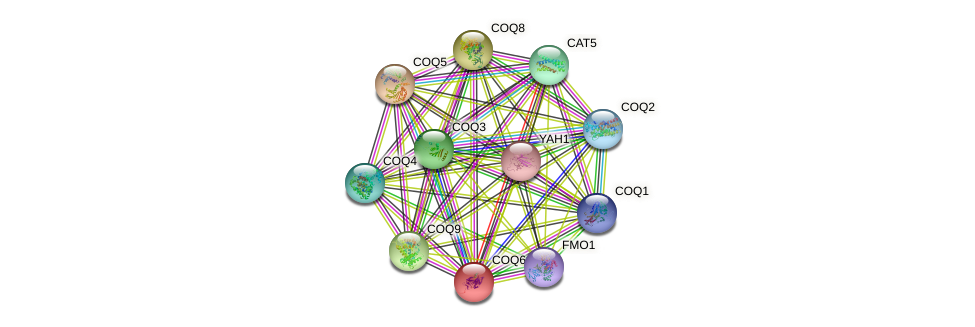 COQ6 protein (Saccharomyces cerevisiae) - STRING interaction network