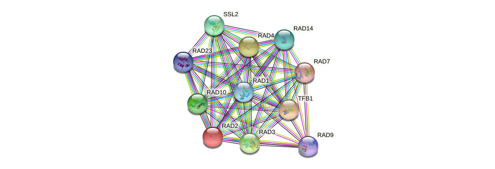 RAD2 protein (Saccharomyces cerevisiae) - STRING interaction network