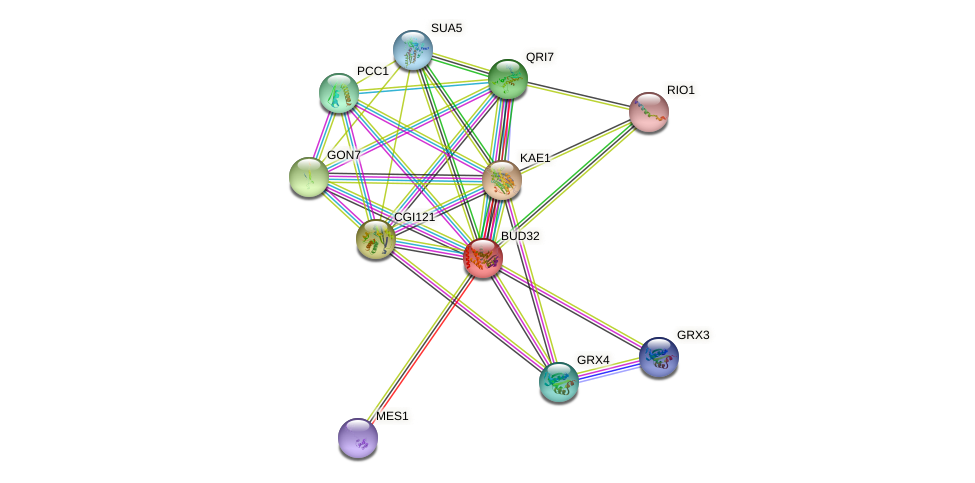 BUD32 protein (Saccharomyces cerevisiae) - STRING interaction network