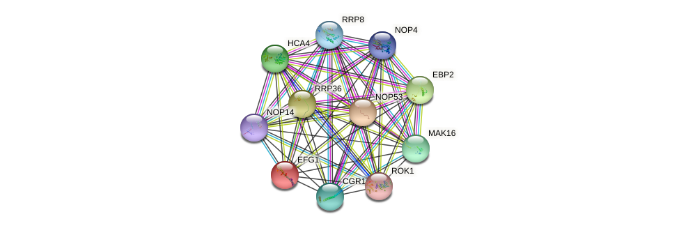 EFG1 protein (Saccharomyces cerevisiae) - STRING interaction network