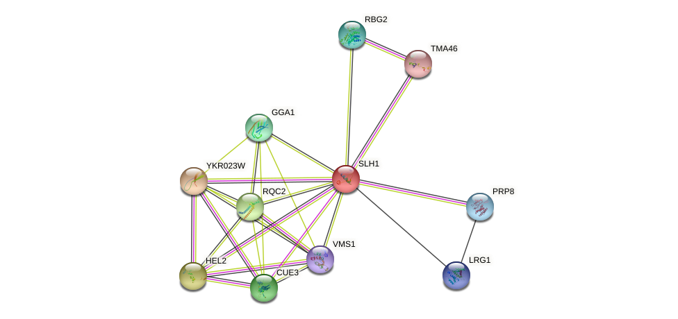 SLH1 protein (Saccharomyces cerevisiae) - STRING interaction network