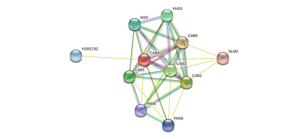 CAB4 protein (Saccharomyces cerevisiae) - STRING interaction network