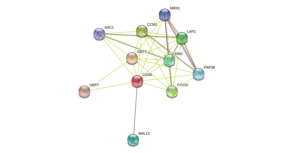 COS6 protein (Saccharomyces cerevisiae) - STRING interaction network