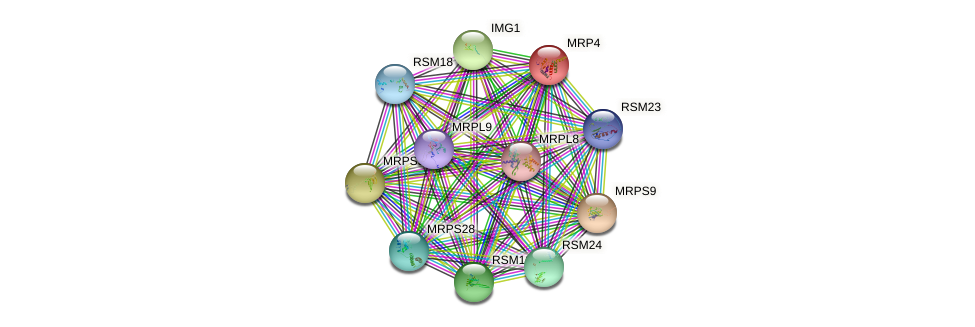 MRP4 protein (Saccharomyces cerevisiae) - STRING interaction network