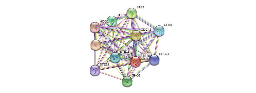 STE20 protein (Saccharomyces cerevisiae) - STRING interaction network