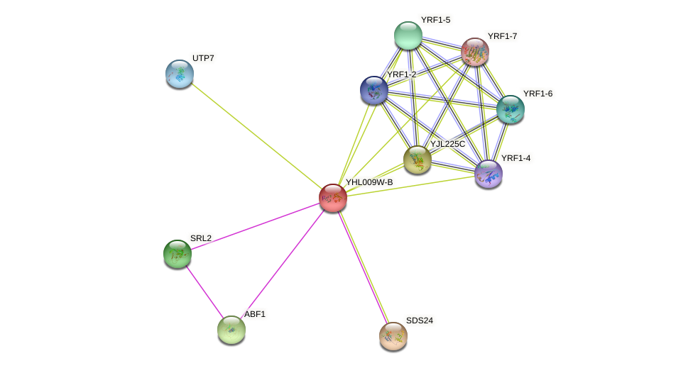 YHL009W-B protein (Saccharomyces cerevisiae) - STRING interaction network