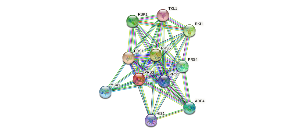 PRS3 protein (Saccharomyces cerevisiae) - STRING interaction network