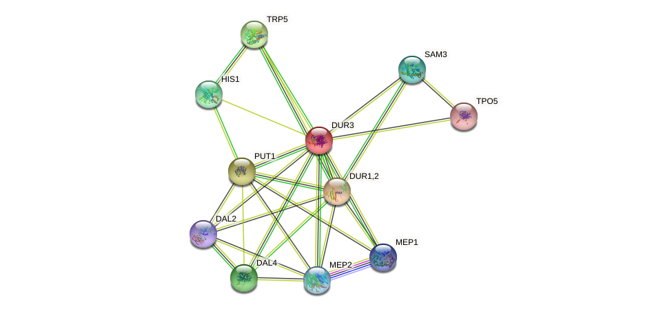 DUR3 protein (Saccharomyces cerevisiae) - STRING interaction network