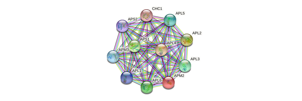 APM2 protein (Saccharomyces cerevisiae) - STRING interaction network