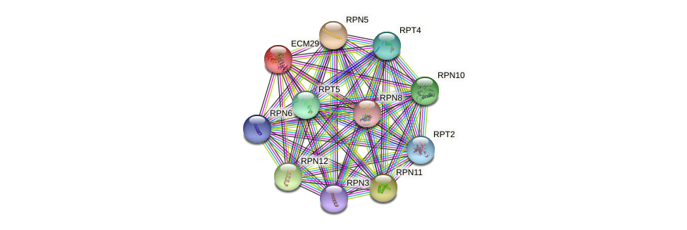 ECM29 protein (Saccharomyces cerevisiae) - STRING interaction network