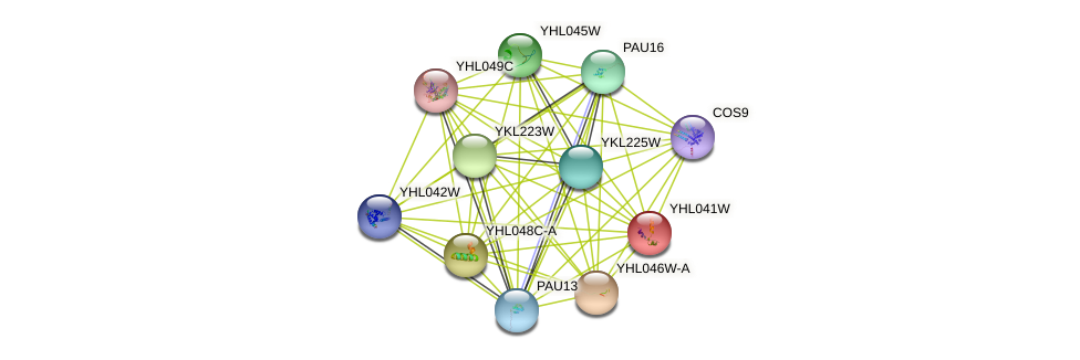 YHL041W protein (Saccharomyces cerevisiae) - STRING interaction network