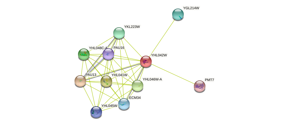 YHL042W protein (Saccharomyces cerevisiae) - STRING interaction network