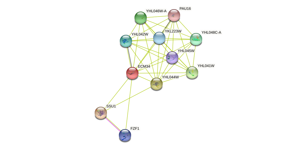 ECM34 protein (Saccharomyces cerevisiae) - STRING interaction network