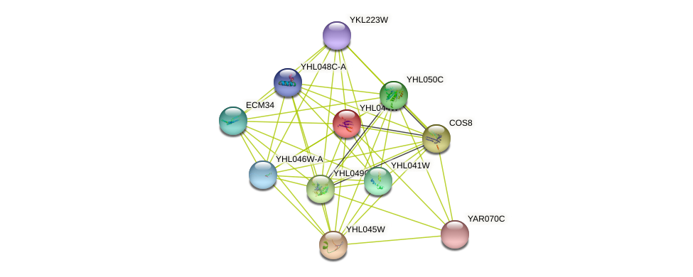 YHL044W protein (Saccharomyces cerevisiae) - STRING interaction network