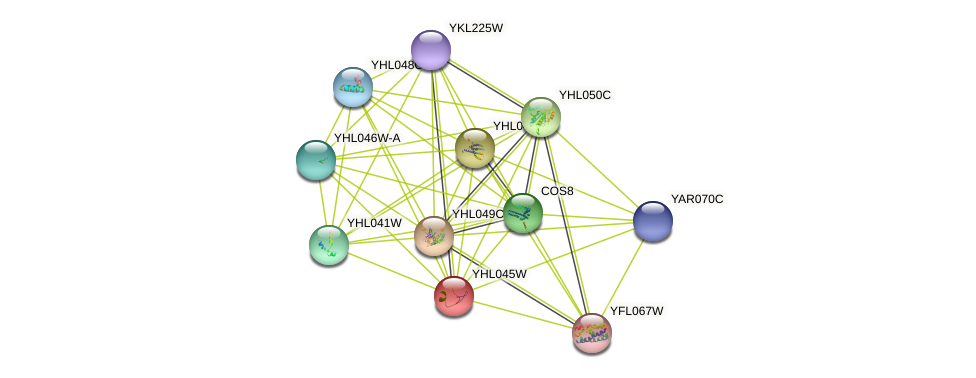 YHL045W protein (Saccharomyces cerevisiae) - STRING interaction network