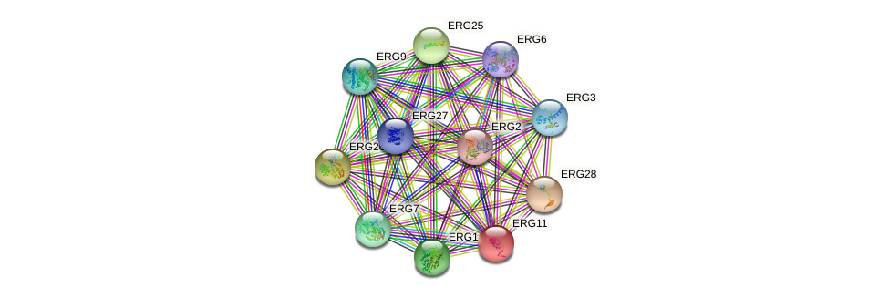 ERG11 protein (Saccharomyces cerevisiae) - STRING interaction network
