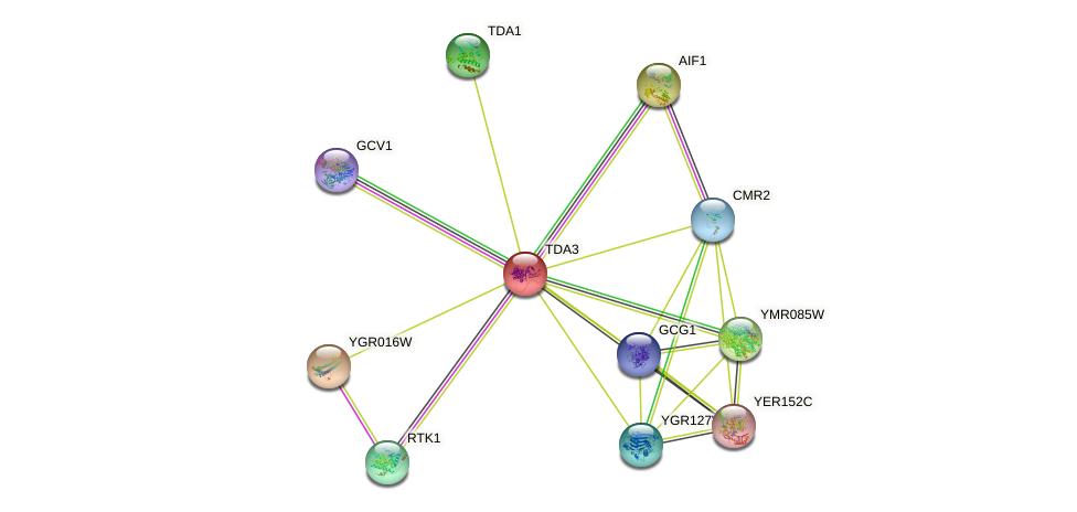 TDA3 protein (Saccharomyces cerevisiae) - STRING interaction network