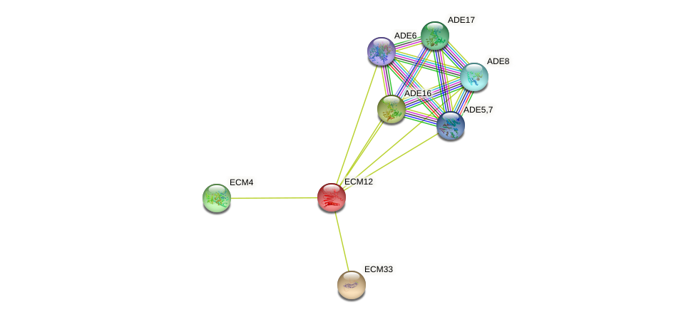 ECM12 protein (Saccharomyces cerevisiae) - STRING interaction network