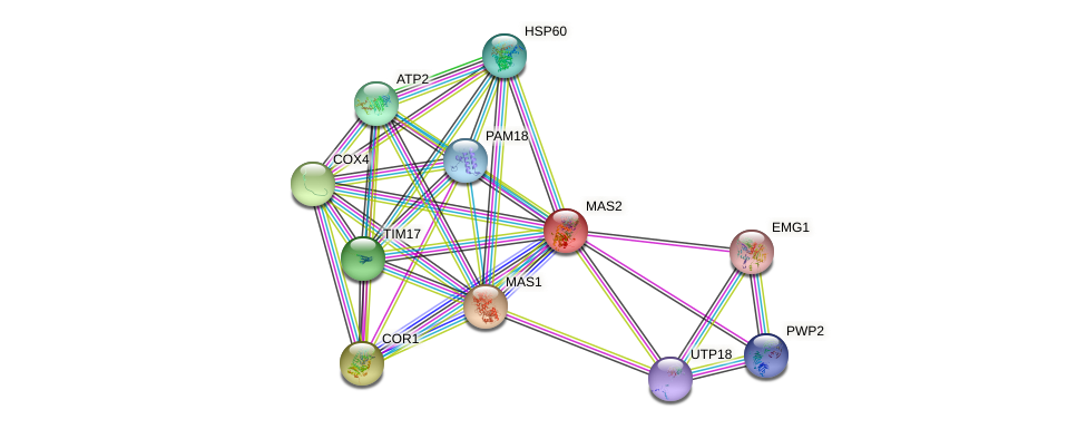 MAS2 protein (Saccharomyces cerevisiae) - STRING interaction network