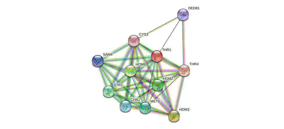 THR1 protein (Saccharomyces cerevisiae) - STRING interaction network