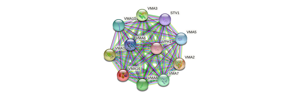 VMA16 protein (Saccharomyces cerevisiae) - STRING interaction network