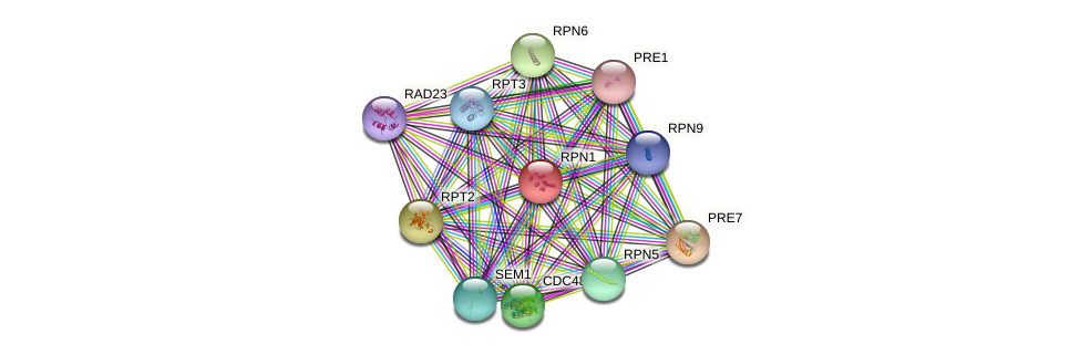 RPN1 protein (Saccharomyces cerevisiae) - STRING interaction network