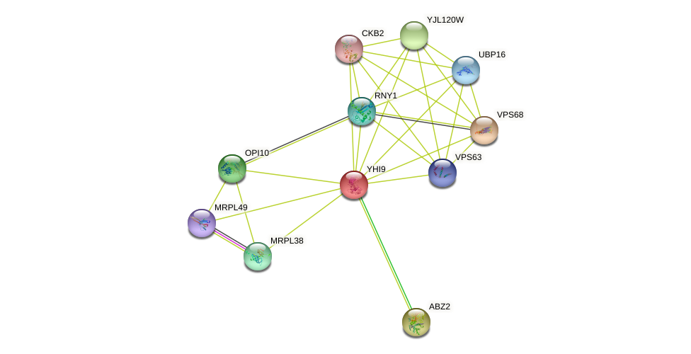 YHI9 protein (Saccharomyces cerevisiae) - STRING interaction network
