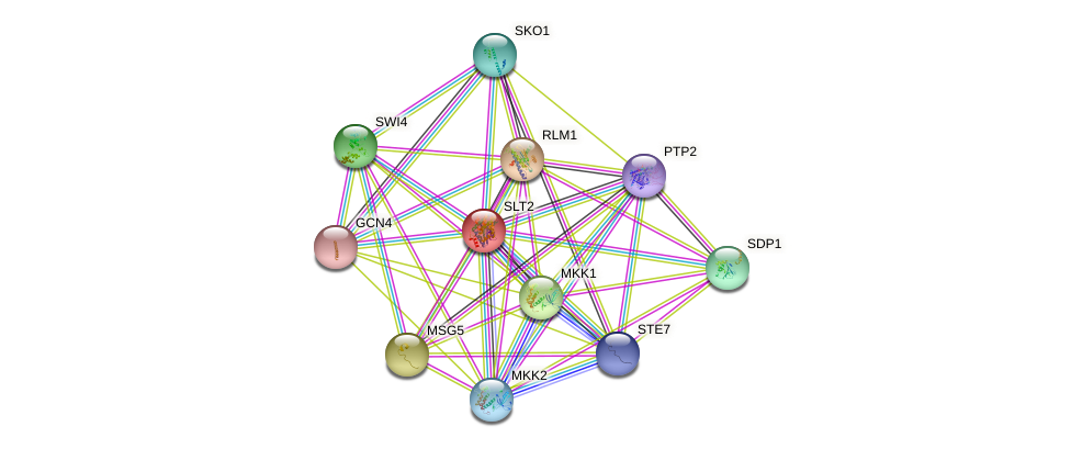 SLT2 protein (Saccharomyces cerevisiae) - STRING interaction network