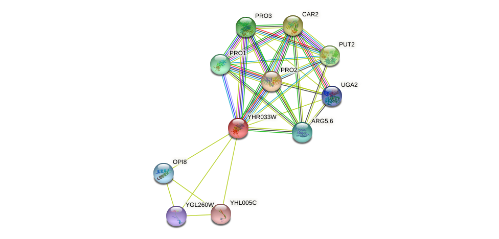 YHR033W protein (Saccharomyces cerevisiae) - STRING interaction network
