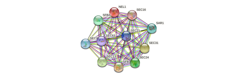 NEL1 protein (Saccharomyces cerevisiae) - STRING interaction network