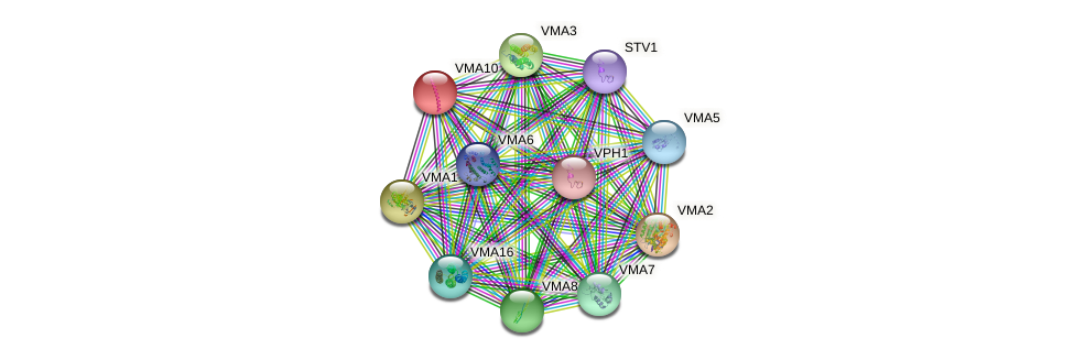 VMA10 protein (Saccharomyces cerevisiae) - STRING interaction network