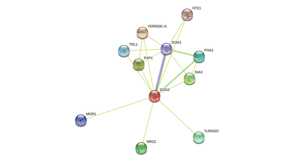 DOG2 protein (Saccharomyces cerevisiae) - STRING interaction network